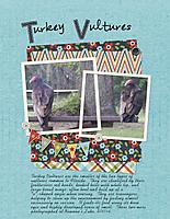 Turkey-Vultures.jpg