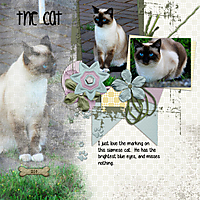 My_Cat.jpg