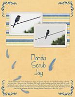 Florida-Scrub-Jay.jpg