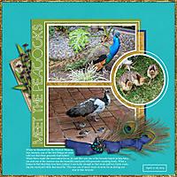 San-Antonio-Peacocks.jpg