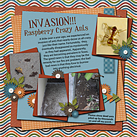 Invasion-of-the-crazy-ants_-4web.jpg