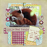 little_Red_Panda_GS.jpg