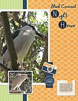 Black-Crowned-Night-Heron.jpg