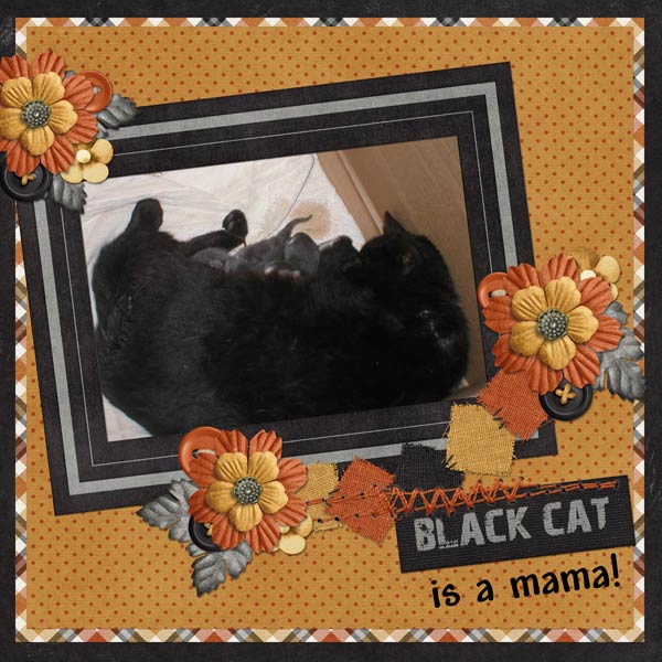 Black Cat is a mama!