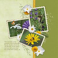 0-Wildflowers-at-Pine2.jpg