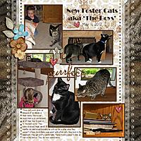 20120511-Foster-cats-arrive.jpg