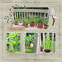 20120705-03-plants.jpg