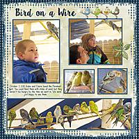 20121007-08-parakeets.jpg