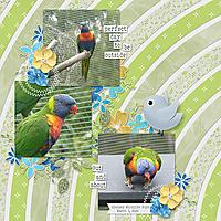 20200301_Birdsweb.jpg