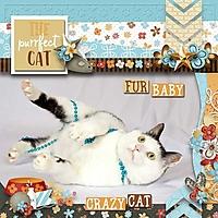 kitty-cat-lindsay-jane-MFis.jpg