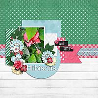 Hibiscus-CT.jpg