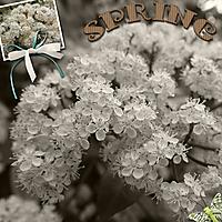 Spring52.jpg