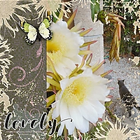dark-blooming-cereus_webv.jpg