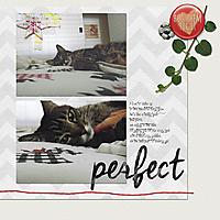 perfect_tabby_webv.jpg