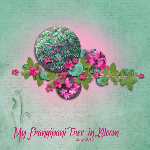 0715 My frangipani tree in bloom