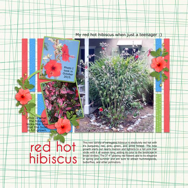 red hot hibiscus