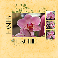 Easter-Orchid.jpg