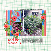 red-hot-hibiscus-4GSweb.jpg