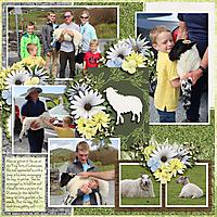 Cahersiveen600-sheep-Tinci_AprM3_2.jpg
