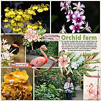 Tinci_EDM4_2_KD_TP_Orchid_farm.jpg