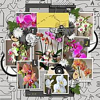 orquideas-600.jpg
