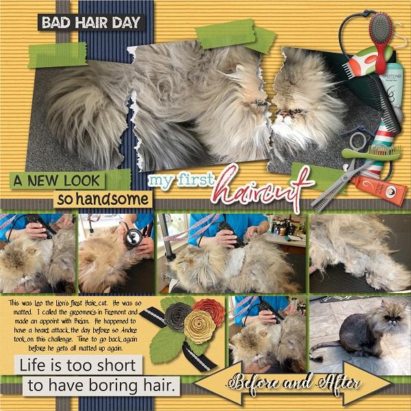 Hair cut day for Fur Babies