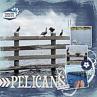 2021-01-25-pelicans.jpg
