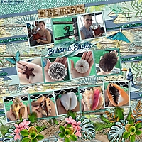 Bahama_Shells-min.jpg