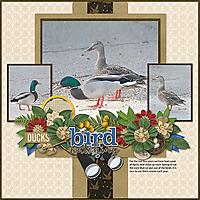 Ducks-copy1.jpg
