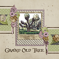 Grand_Old_Tree_small.jpg