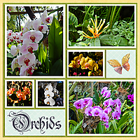 Orchids_small.jpg