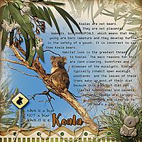 koala_webjmb.jpg