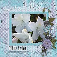 White-Azalea.jpg