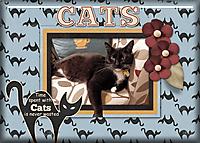 Cats21.jpg