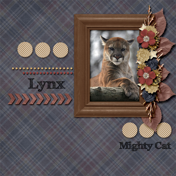 The Mighty Lynx