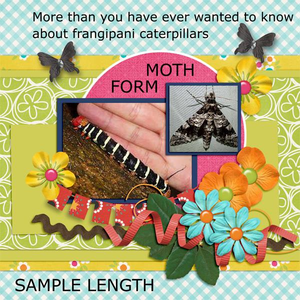 Frangipani caterpillars 2
