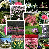 Flowers_small.jpg