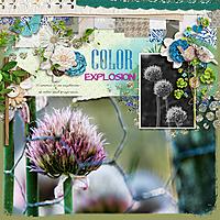 colorexplosion-600.jpg