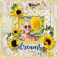 sunflower-dreams-aimee-harr.jpg