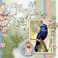 DMo_Blue_Bunting.jpg