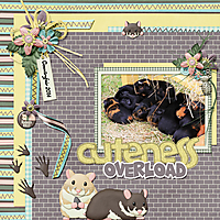 H_C_Cuteness_overload-001.jpg