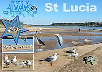 Estuary-01-S.jpg