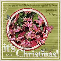 ChristmasCactus.jpg