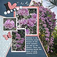 Backyard_Beauty_small.jpg