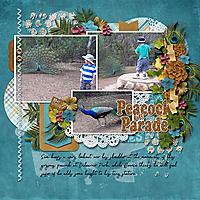 Peacock-on-Parade_webjmb.jpg