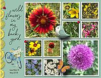 wildflowers_in_the_yard_small.jpg