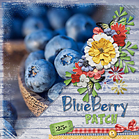 BlueberryPatch.jpg