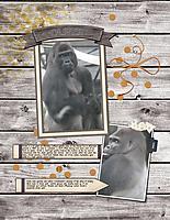 Oliver-_gorilla_.jpg