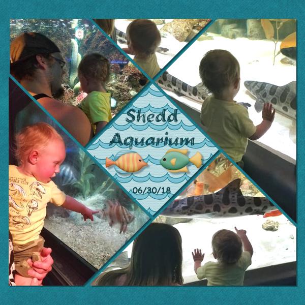 Shedd Aquarium - Gabriel