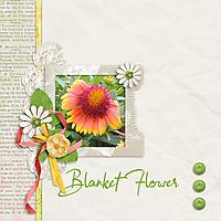 0-Blanket-Flower.jpg